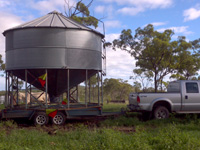 Bringing in the first silo for mung bean storage